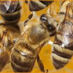 bee removal charlottesville va