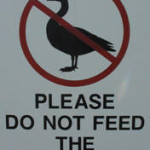 canada geese removal - do not feed the geese