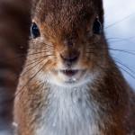squirrel removal charlottesville va